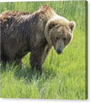 Don't Mess With Mama Bear Canvas Print by Belinda Greb