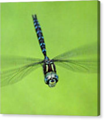 Dragonfly #1 Canvas Print by Ben Upham III