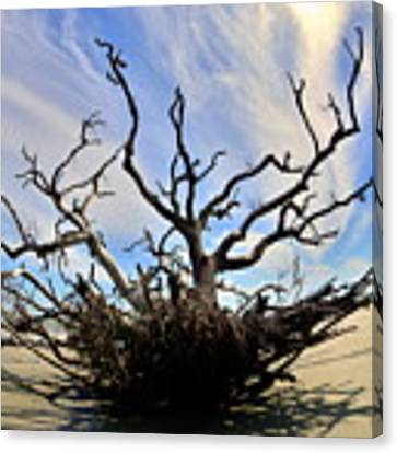 Driftwood And Roots Hunting Island Sc Canvas Print by Lisa Wooten
