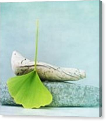 Driftwood Stones And A Gingko Leaf Canvas Print