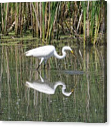 Egret Canvas Print by David Armstrong