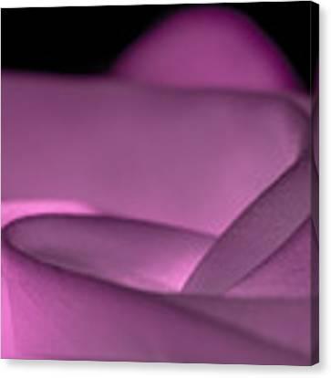 Fabric Pink Rose Canvas Print by Yogendra Joshi