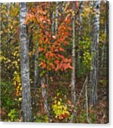 Fall Color At Gladwin 4543 Canvas Print by Wesley Elsberry
