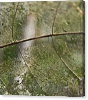fallen Leaf Canvas Print by Debbie Cundy