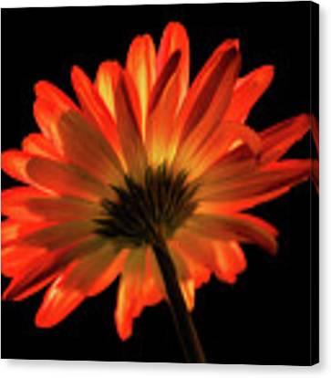 Fire Flower Canvas Print by Mary Jo Allen