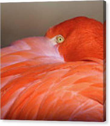 Flamingo Canvas Print by Michael Hubley