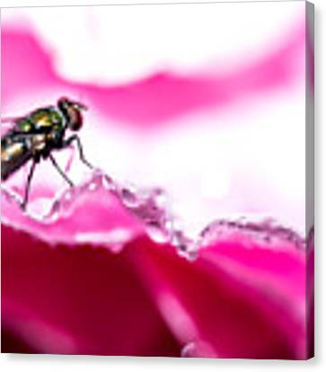Fly Man's Floral Fantasy Canvas Print by T Brian Jones