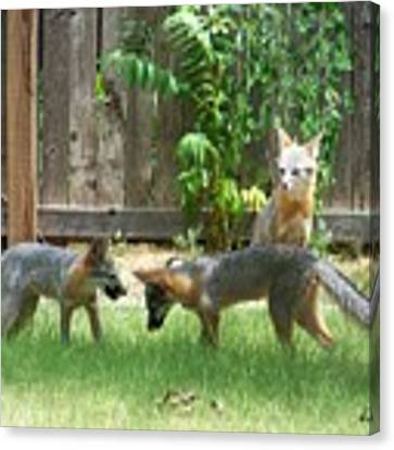 Fox Family Canvas Print by Deleas Kilgore