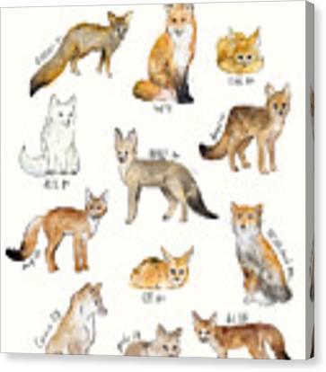 Foxes Canvas Print by Amy Hamilton