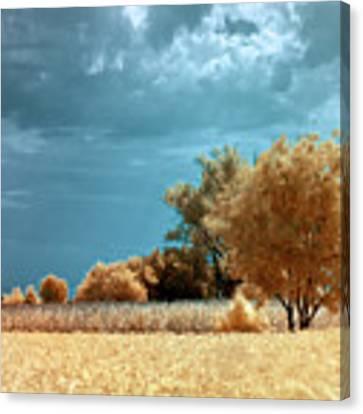 Golden Summerscape Canvas Print by Helga Novelli