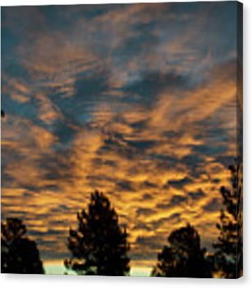 Golden Winter Morning Canvas Print by Jason Coward