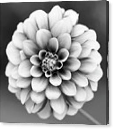 Graytones Flower Canvas Print