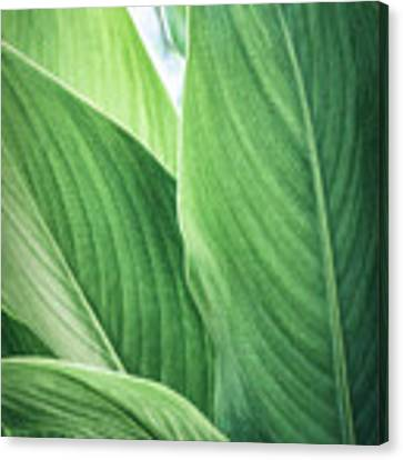 Green Leaves No. 2 Canvas Print by Todd Blanchard