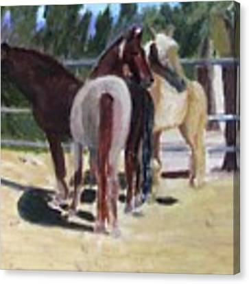 Gregory And His Mares Canvas Print by Linda Feinberg