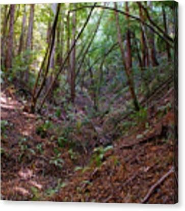 Gully On Mt Tamalpais #2 Canvas Print by Ben Upham III
