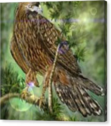 Hawk In The Evergreens Canvas Print by Darren Cannell