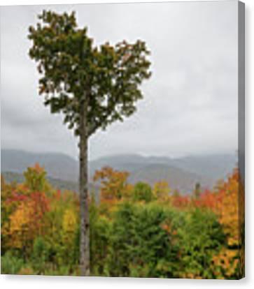 Heart Tree - Kancamagus Highway, New Hampshire Canvas Print by Erin Paul Donovan