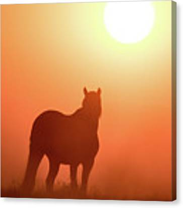 Horse Silhouette Canvas Print by Wesley Aston