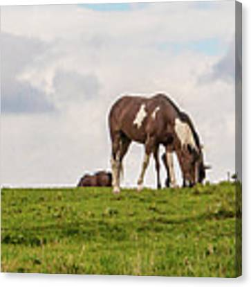 Horses And Clouds Canvas Print by D K Wall