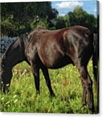 Horses Grazing Canvas Print by Dee Flouton