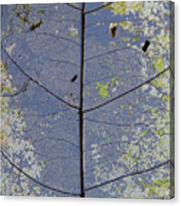 Leaf Structure Canvas Print by Debbie Cundy