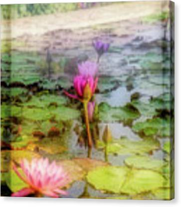 Lillie's Of Capistrano Canvas Print by Michael Hope