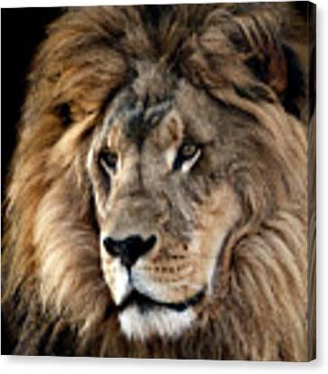 Lion King Of The Jungle 2 Canvas Print by James Sage