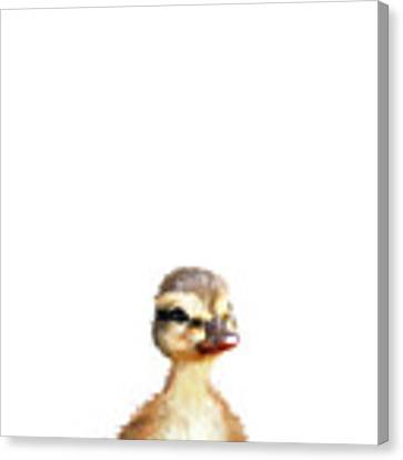 Little Duck Canvas Print by Amy Hamilton