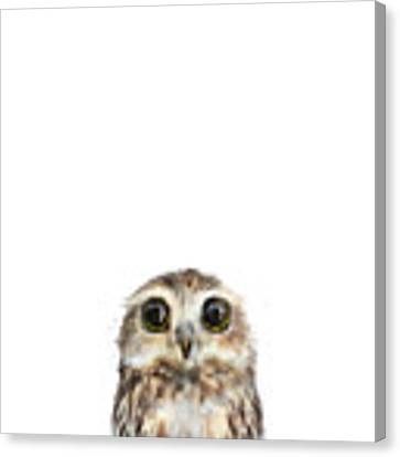 Little Owl Canvas Print by Amy Hamilton