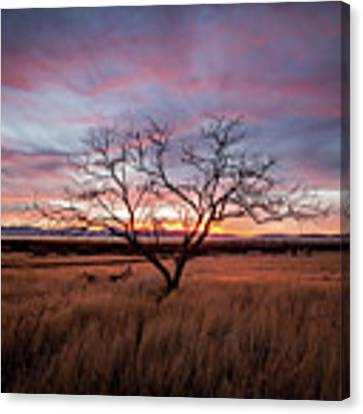 Little Tree Sunset Canvas Print by Wesley Aston
