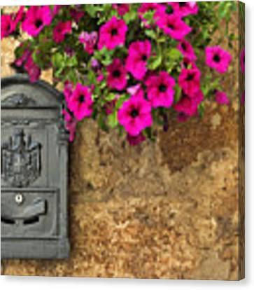 Mailbox With Petunias Canvas Print by Silvia Ganora