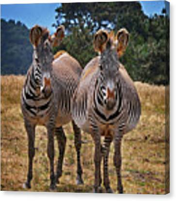 Mama And Friend Canvas Print by Melinda Hughes-Berland