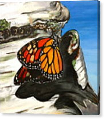 Monarch On Birch Canvas Print by Meghan OHare
