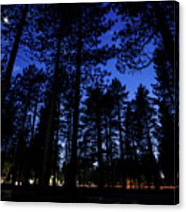 Moonrise In The Woods Canvas Print by Margaret Pitcher
