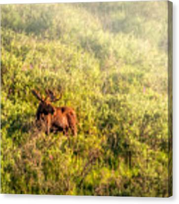 Moose In The Mist Canvas Print by Claudia Abbott