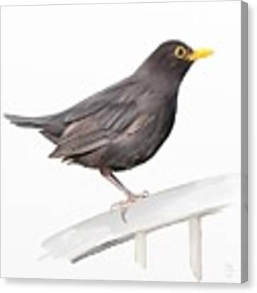 Ms. Blackbird Is Brown Canvas Print by Ivana Westin