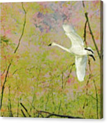 On The Wing Canvas Print by Belinda Greb