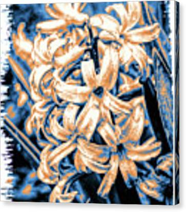 Painted Hyacinth Canvas Print by William Havle