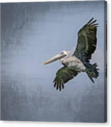 Pelican Flight Canvas Print by Carolyn Marshall