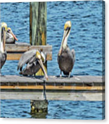 Pelicans Waiting For Their Ship To Come In Canvas Print by Bob Slitzan