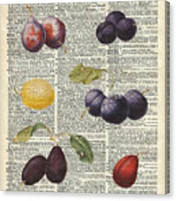 Plums Vintage Illustration Over A Old Dictionary Page Canvas Print by Anna W