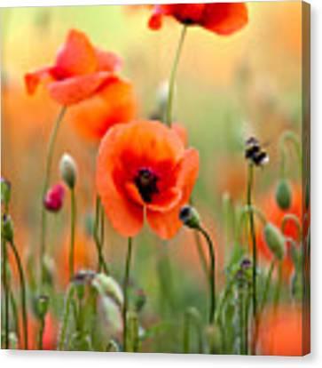 Red Corn Poppy Flowers 06 Canvas Print by Nailia Schwarz