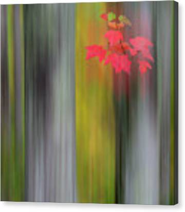 Red Leaves - Abstract Canvas Print by Gary Lengyel