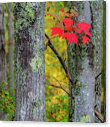 Red Leaves Canvas Print by Gary Lengyel