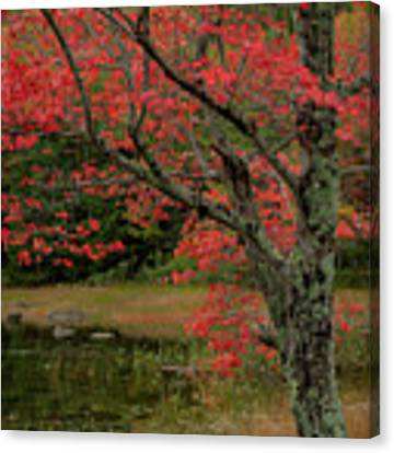 Red Tree II Canvas Print by Gary Lengyel