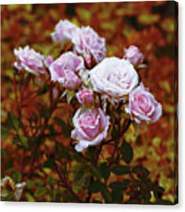 Rusty Romance In Pink Canvas Print by Ivana Westin