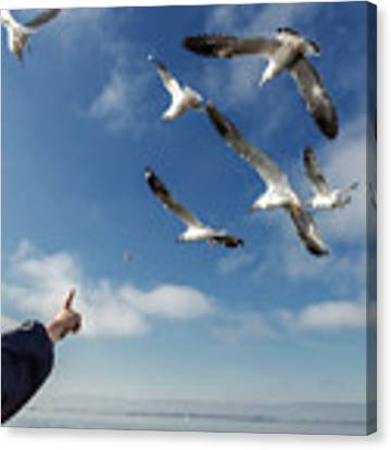 Seagull Flying Canvas Print by Pradeep Raja PRINTS