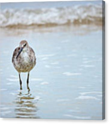 Searching Canvas Print by Todd Blanchard