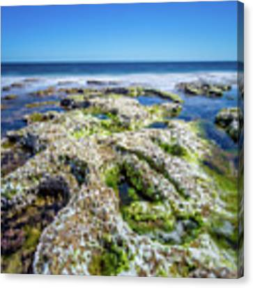 Seaweed And Salt. Canvas Print by Gary Gillette