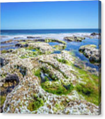 Seaweed And Salt Landscape. Canvas Print by Gary Gillette